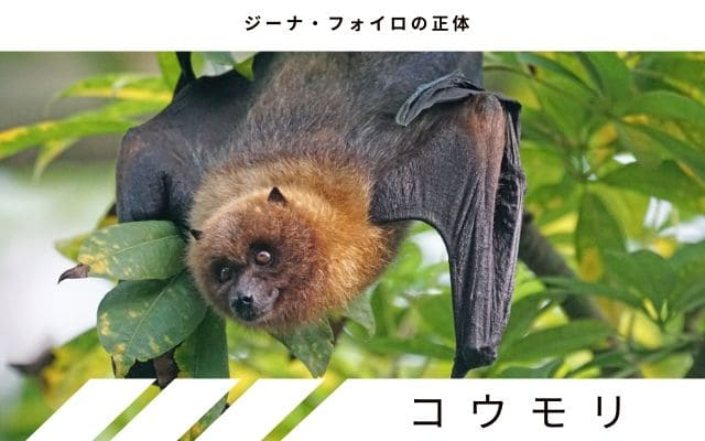 説2: コウモリの誤認説