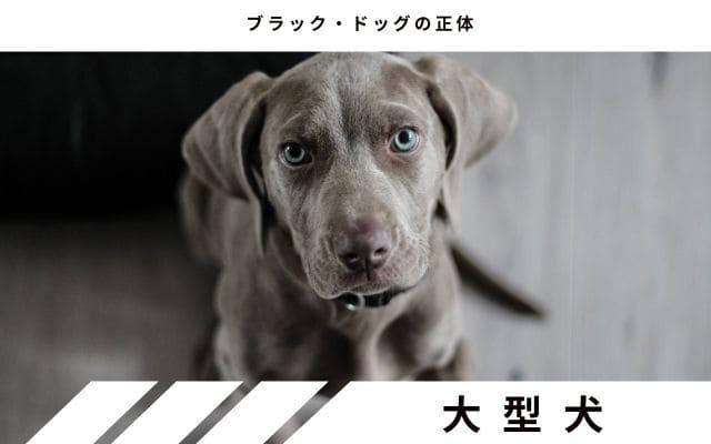 大型犬の見間違い説