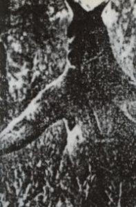 1978年の巨大カンガルー