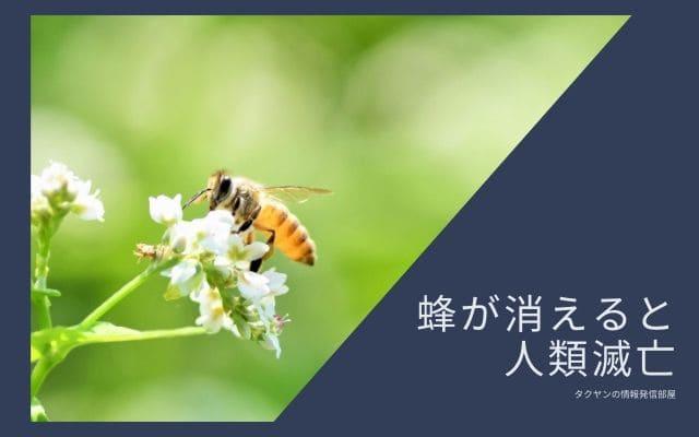アインシュタインの予言1:蜂が消えると人類は死ぬ