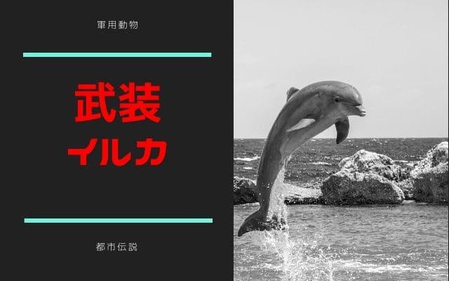 動物兵器:軍用イルカ